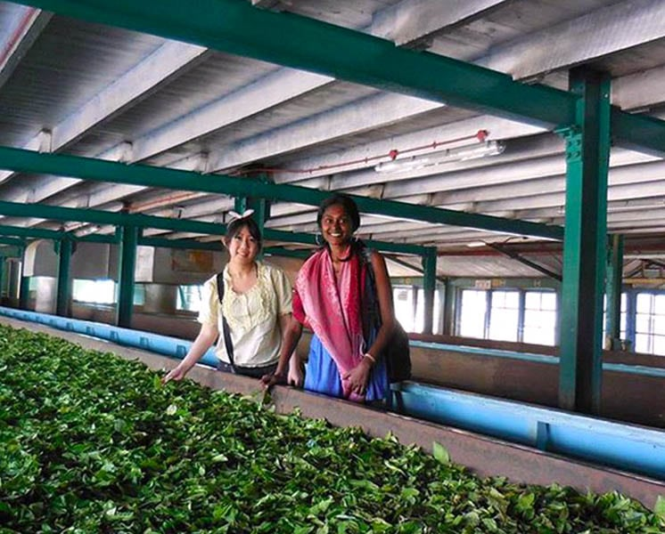 Kandy Tea Factory