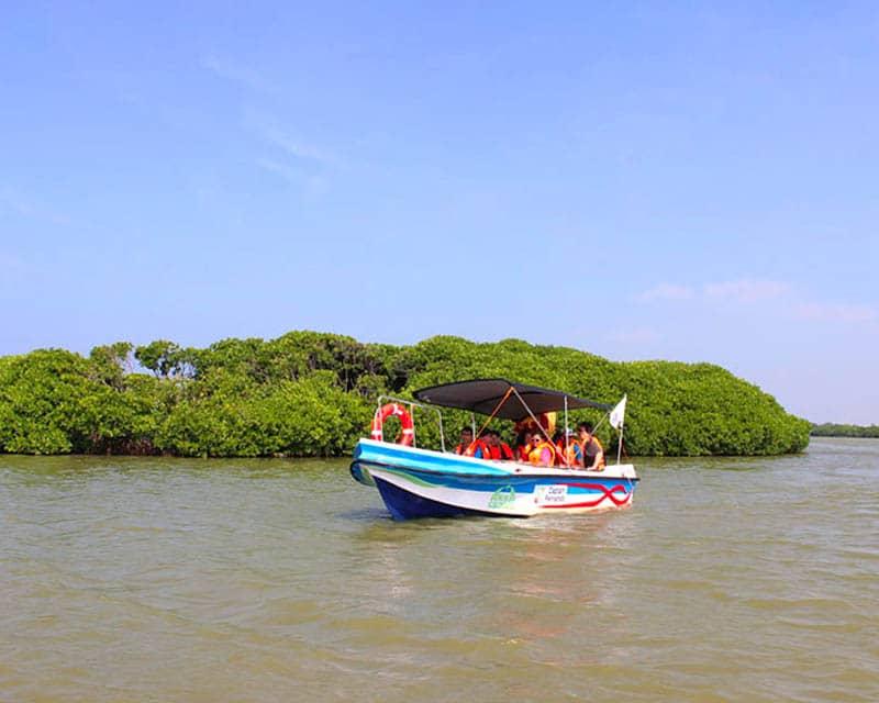 Muthurajawela Boat Tour